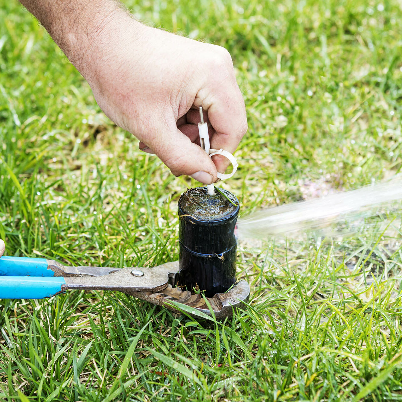 A pop-up sprinkler system head is being adjusted with a key to decrease or increase radius of the spray.